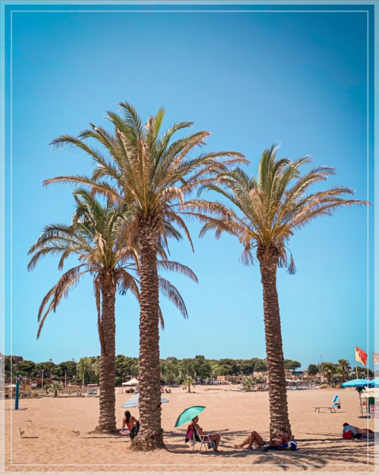 Palm trees at San Vito Lo Capo beach in Sicily