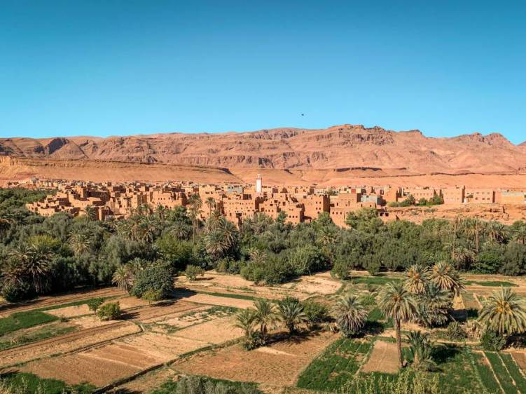Lush green palm grove in Tinghir Oasis, Morocco