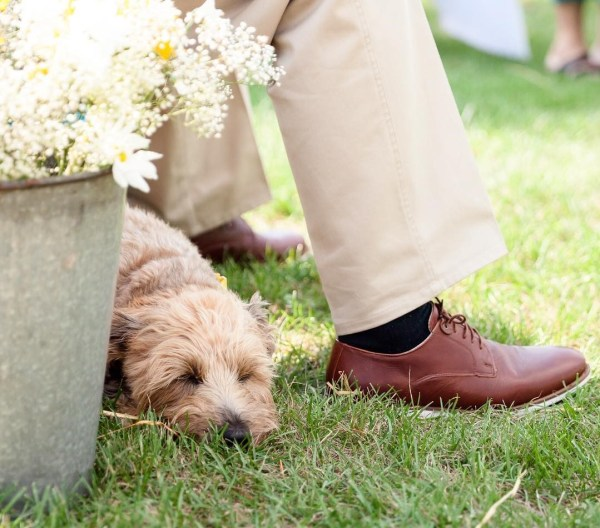 pet_friendly wedding_4