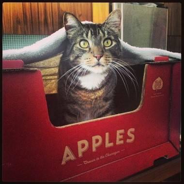 Anubis apples