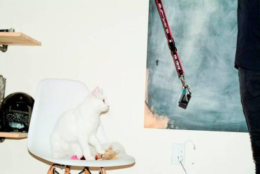 legs cat 3