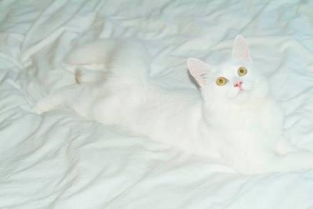 legs cat 8