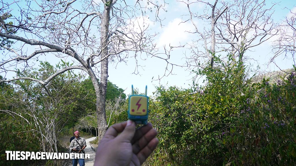 komodo-island-26-tree