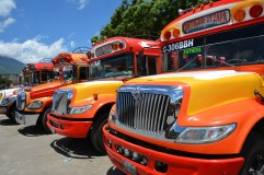 Glorious buses