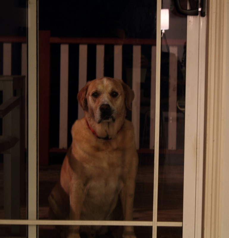 May I come in please... it's wet on the veranda