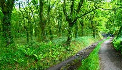 Hobbit-worthy forests