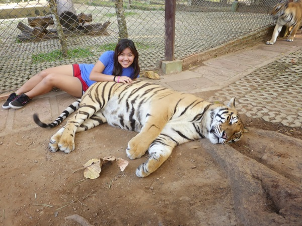 New York Tiger Selfies