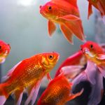 Fish For Wealth All About The Feng Shui Aquarium
