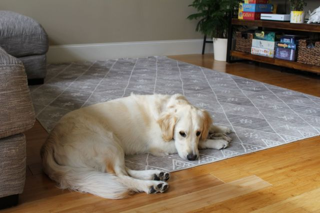 Ruggable Review: An Easy-to-Wash Area Rug