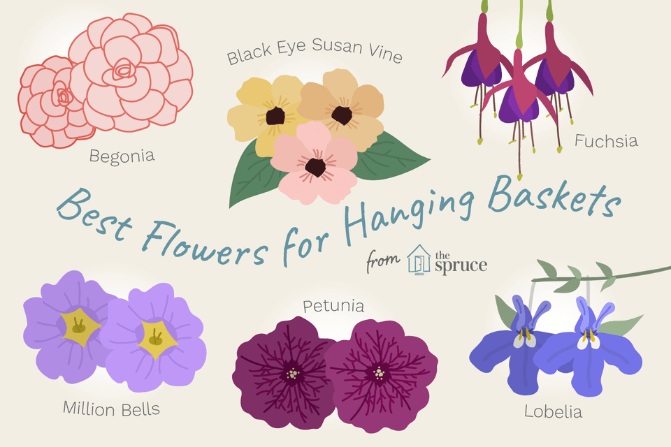 11 Best Flowers For Hanging Baskets