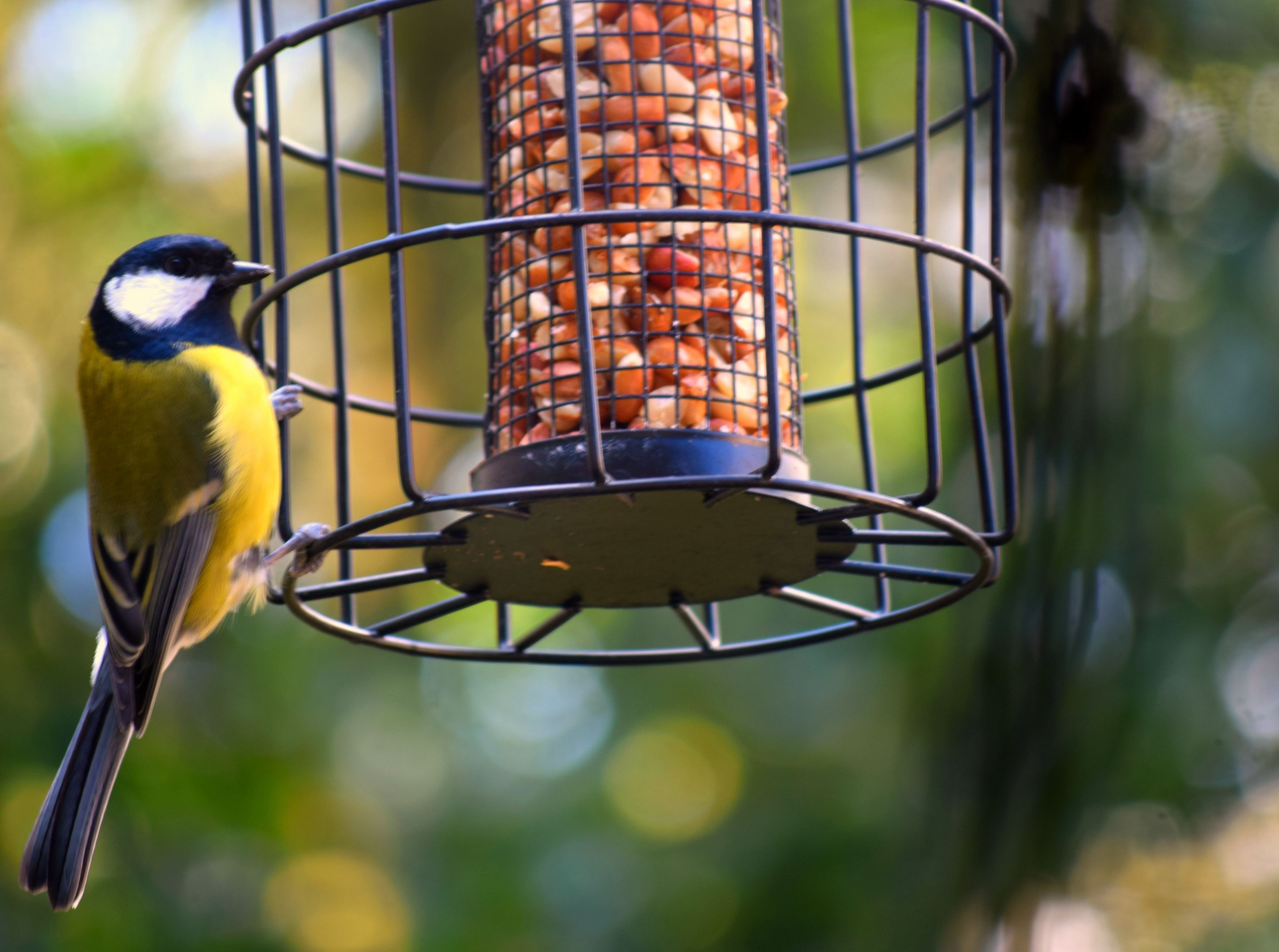 The 8 Best Squirrel Proof Bird Feeders Of 2019