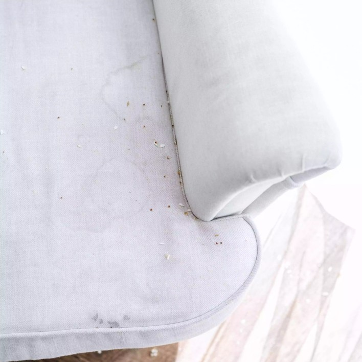 couch crevices can harbor bugs
