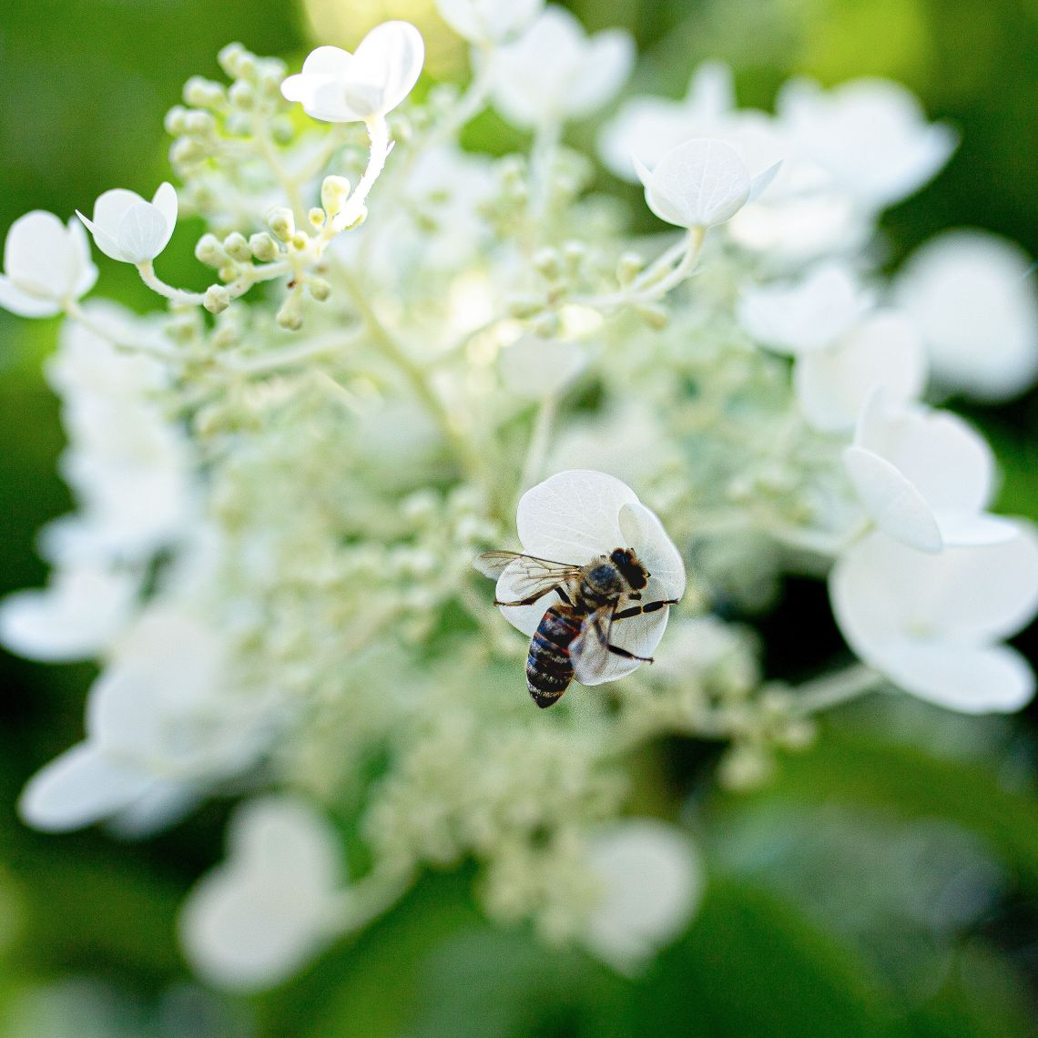 How To Attract Bees And Other Pollinators To Your Garden