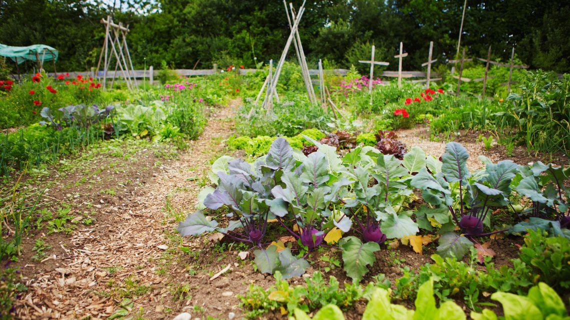 How To Prepare A Fall Vegetable Garden