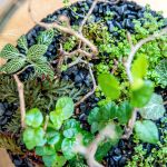How To Make A Basic Terrarium