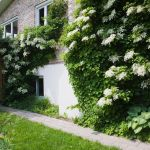 11 Best Shade Plants To Grow Along A North Facing Wall