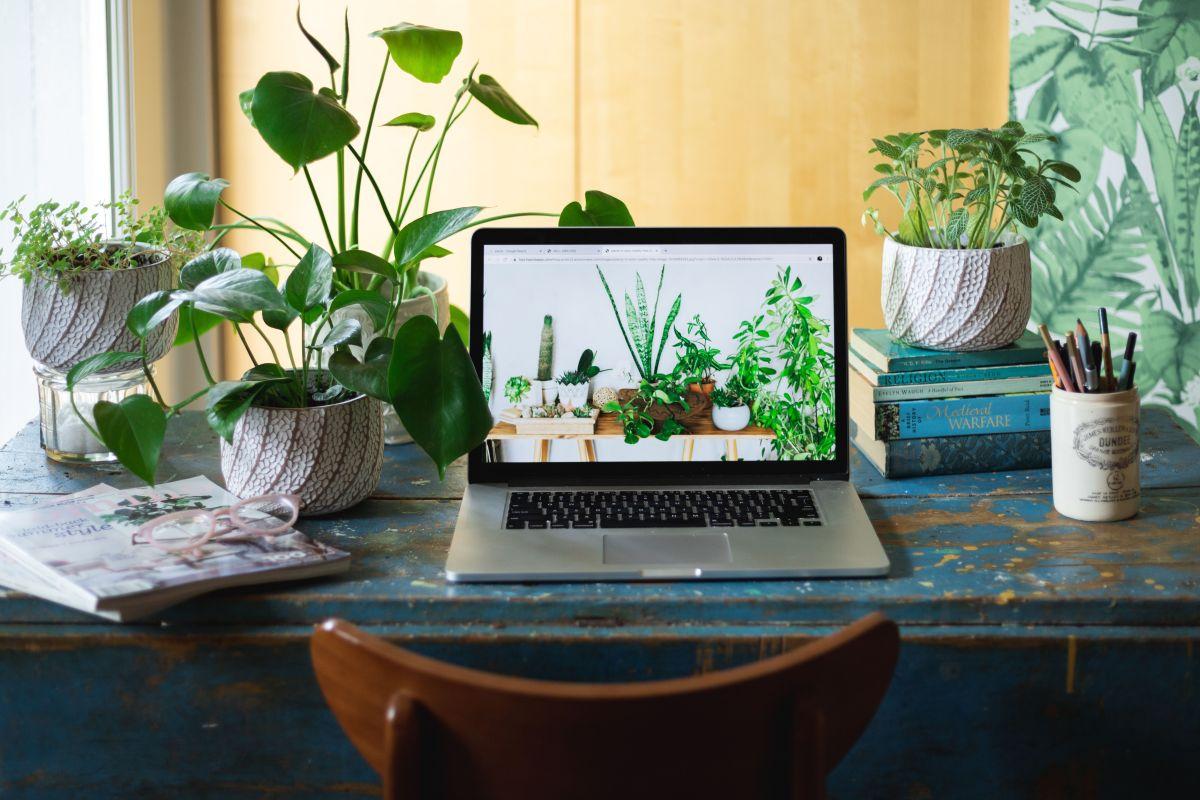 thespruce.com best houseplants for sun 4147670 1 3d69cd3cf2b943d9aa8363cde764e595