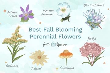 17 Best Perennials That Offer Long Bloom Periods