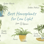 7 Recommended Houseplants For Low Light Conditions