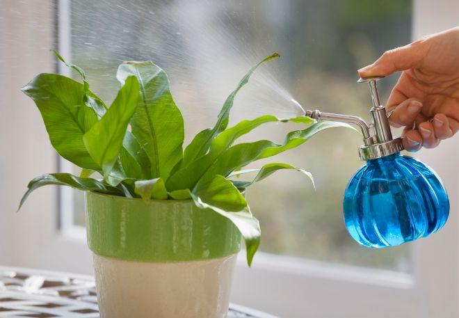 designer clare matthews houseplant project misting spraying plant 523556424 5a7e198da18d9e0036607cac - HEALTH AND FITNESS