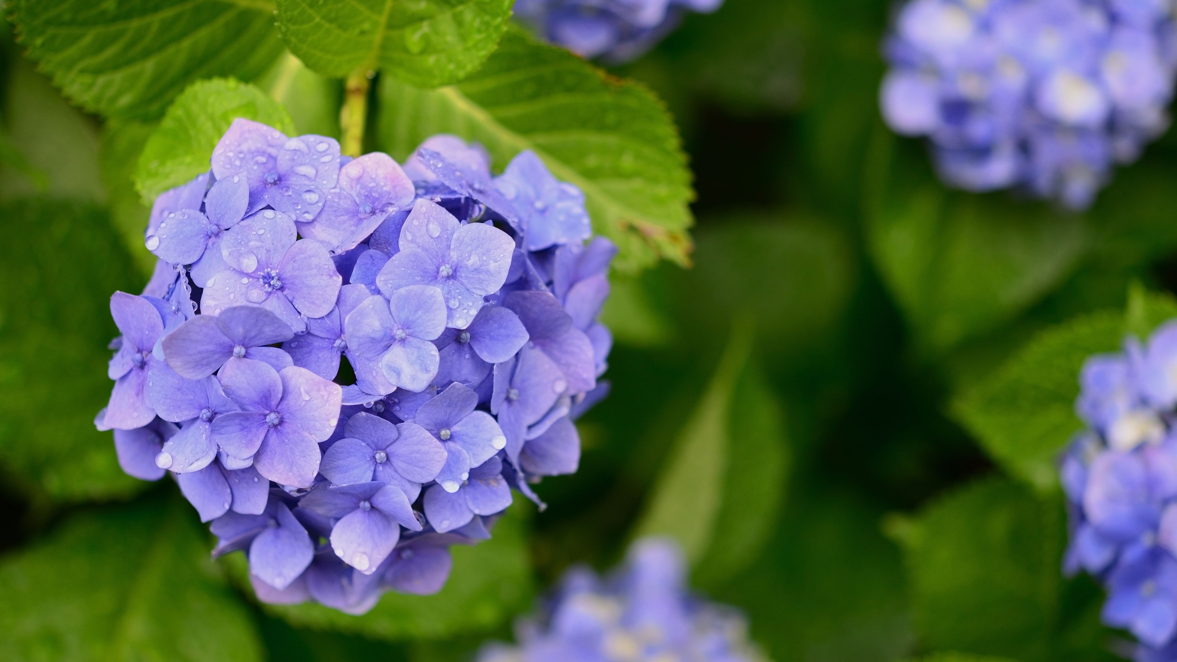10 Easy To Grow Plants For Outdoors
