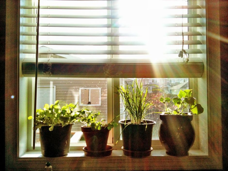 Plants sitting on the windowsill