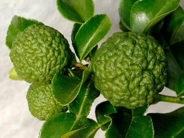 What Are Makrut Lime Leaves and How Are They Used?