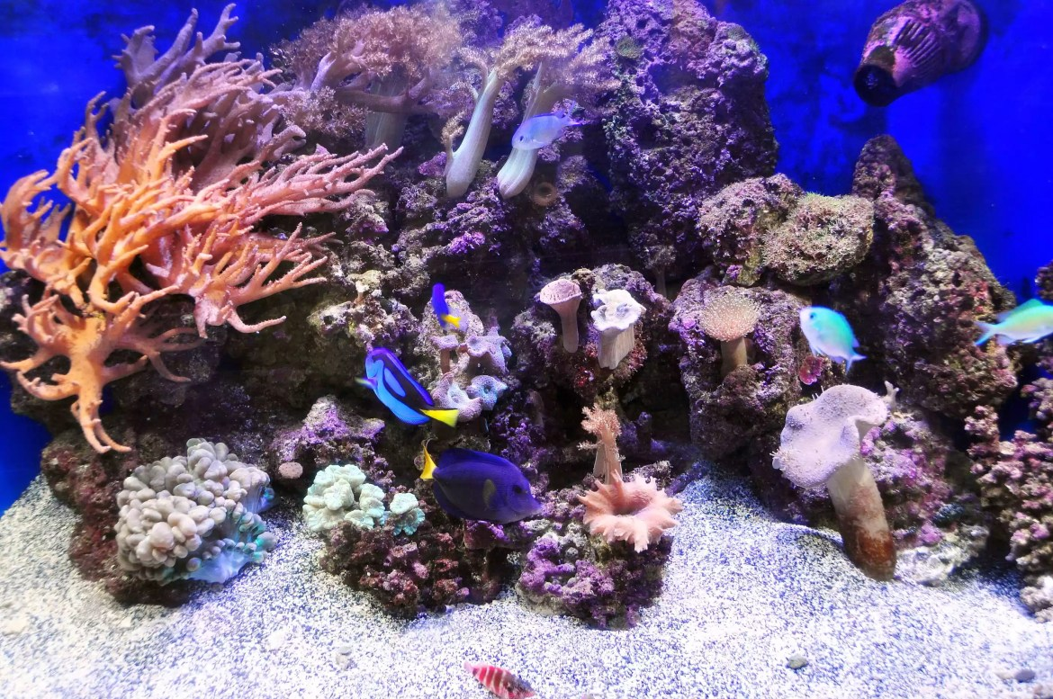 Fish tank with bright blue fish.