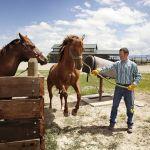 What S Best A Mare Gelding Or Stallion