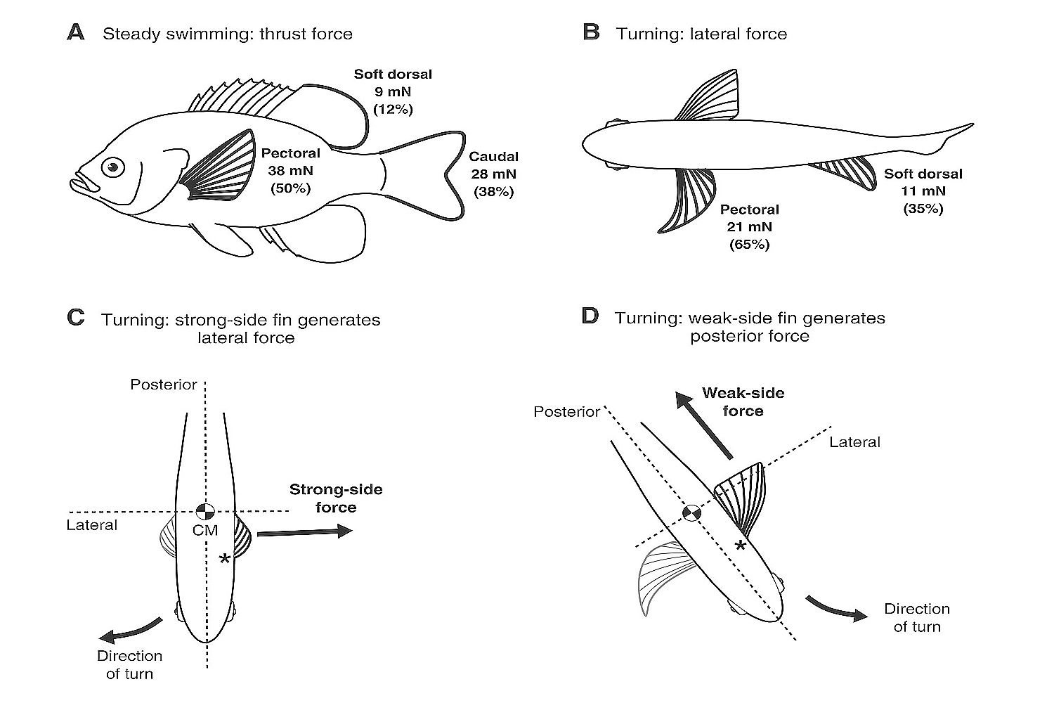 Swimming Balance Oxygen And Food Consumption In Fish