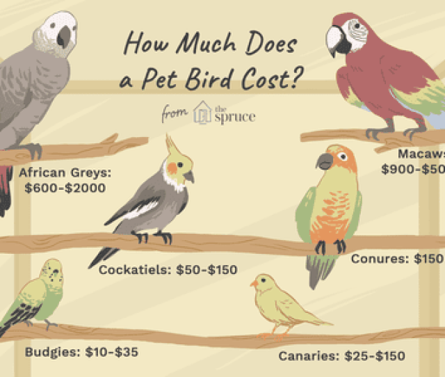 Pet Bird Price Guide
