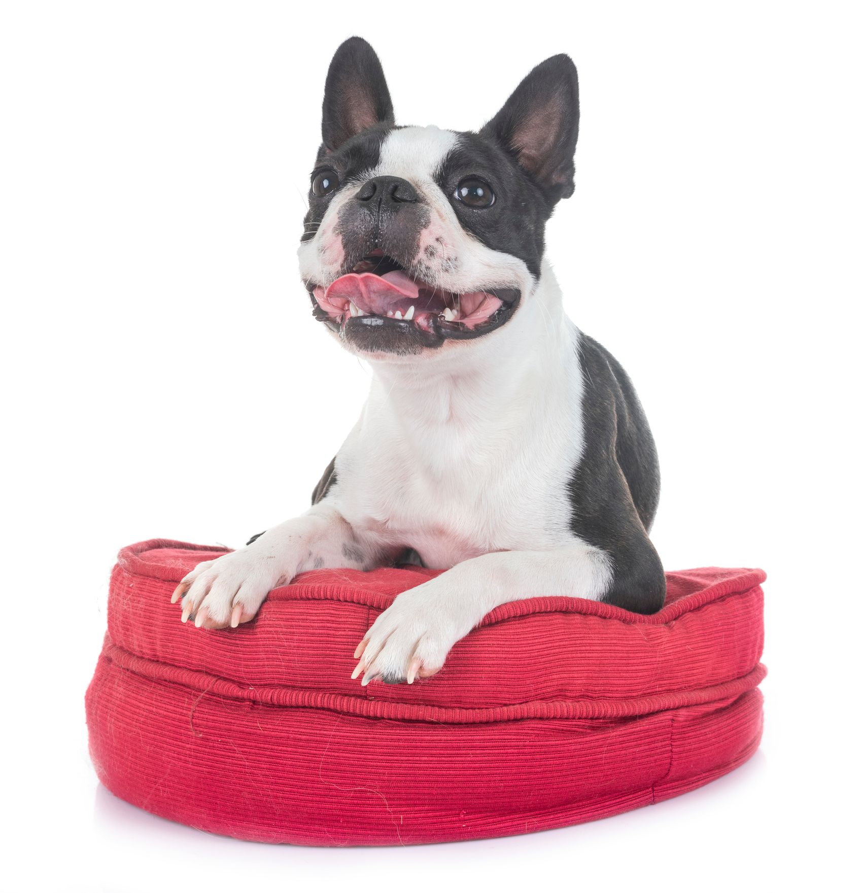 The 9 Best Orthopedic Dog Beds Of 2020