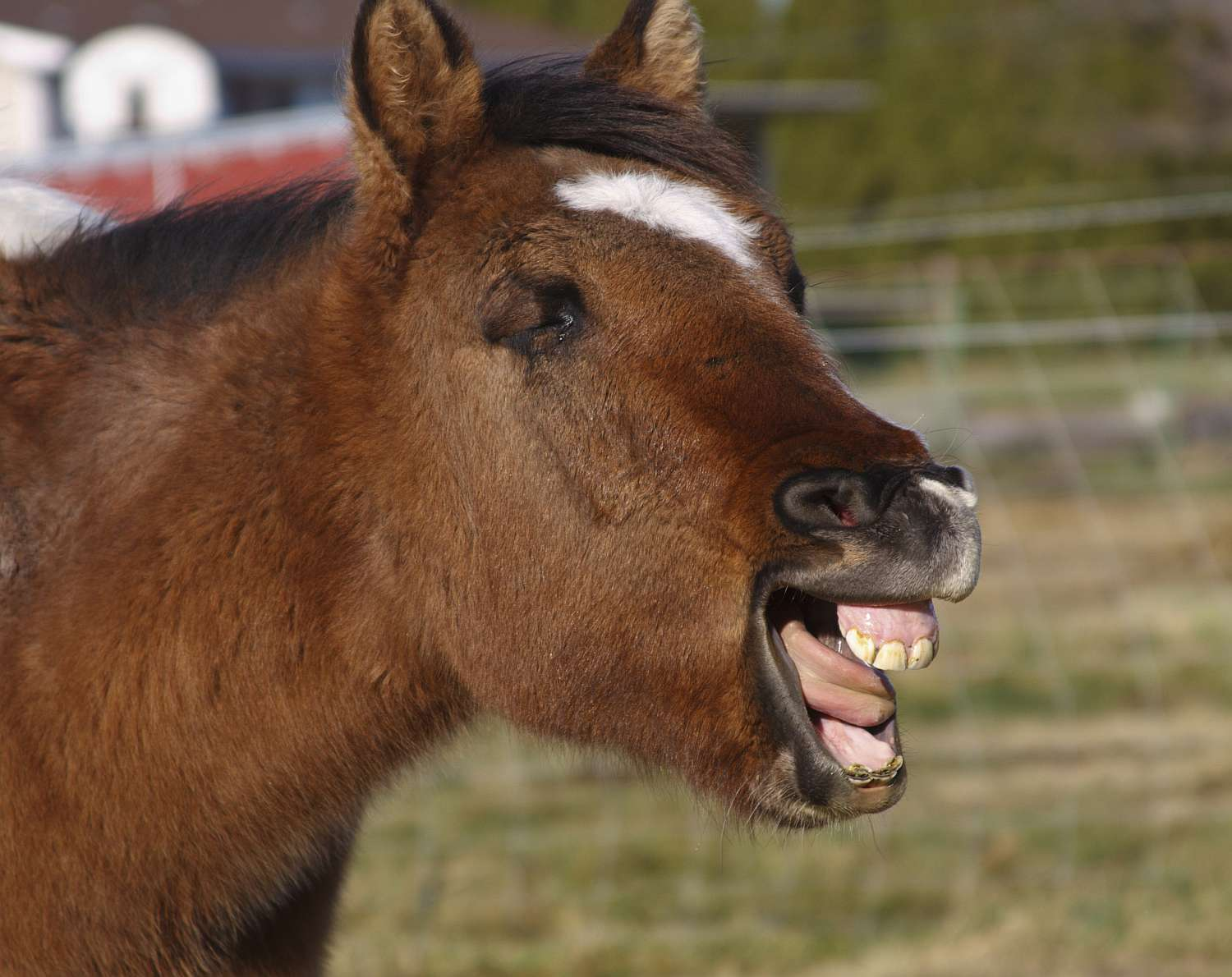 Learn About Your Horse S Teeth