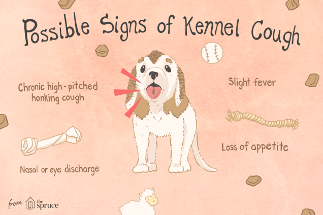 How to Treat Kennel Cough in Puppies