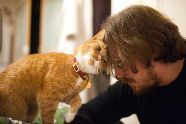 Image result for cats groom loving
