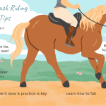How To Ride A Horse Safely