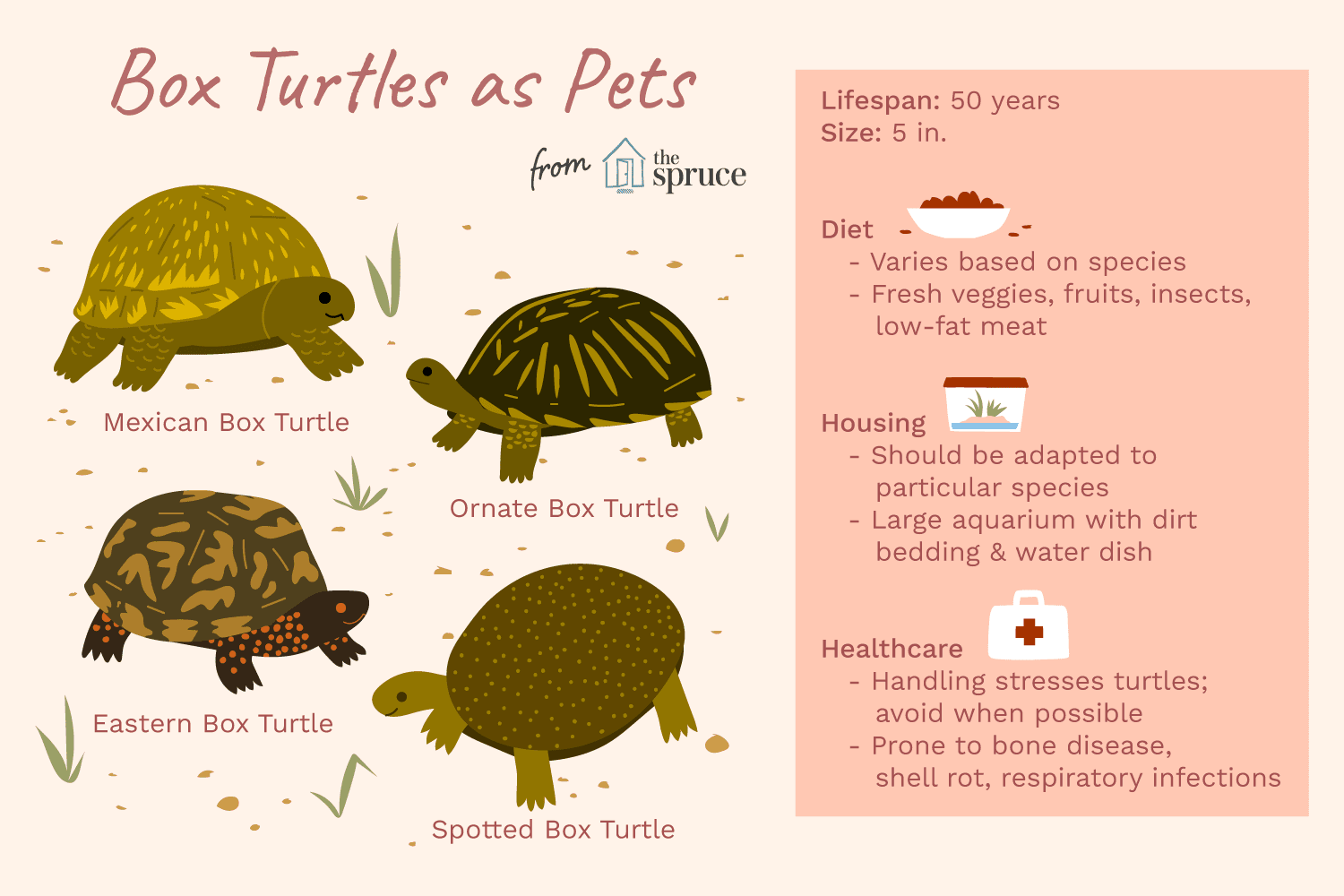 A Guide To Caring For North American Pet Box Turtles