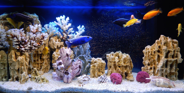 Best Led Lighting Reef Tank