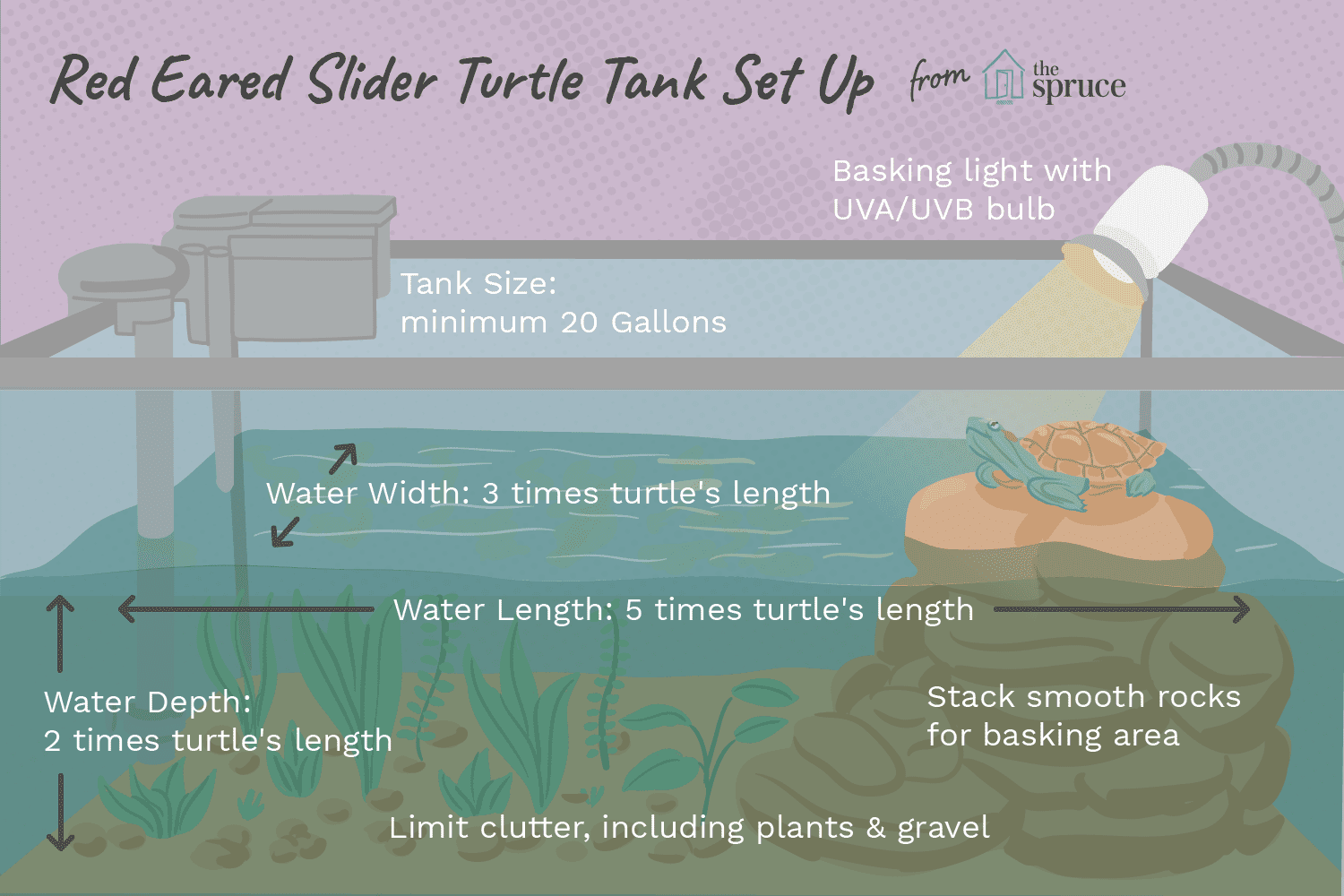 How To Set Up A Tank For Your Red Eared Slider Turtle