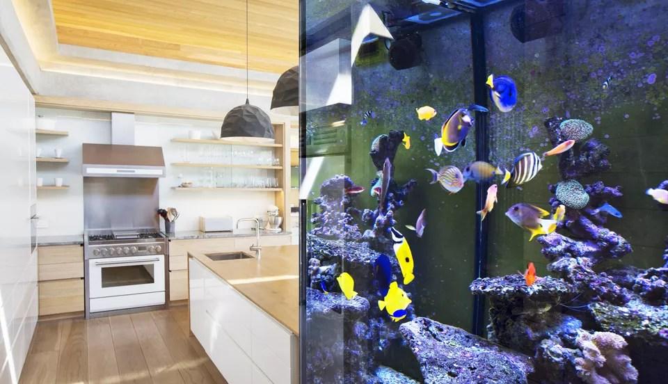 peces tropicales en acuario en una cocina
