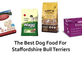 Best Dog Food For Staffies