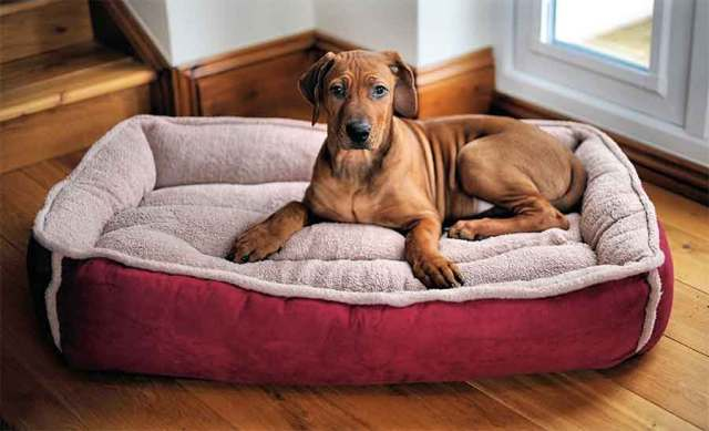 Wolfybeds Dog Bed