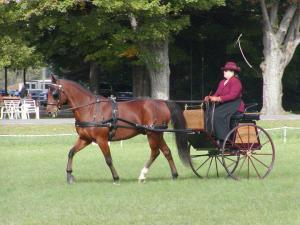 Draken at the Saratoga Driving Trial competing in driven dressage.