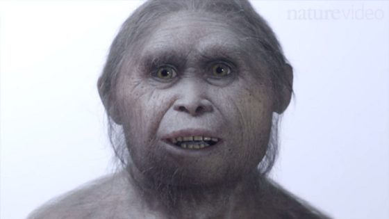 "A reconstruction of Homo floresiensis.  Researchers have discovered 700,000 fossilized remains on the Indonesian island of Flores, a possible ancestor to the Homo floresiensis, or ""Hobbit hominin."""