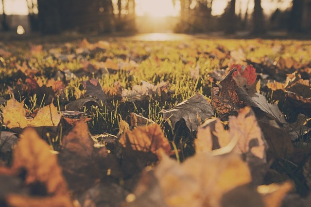 forest-meadow-leaves-autumn-large