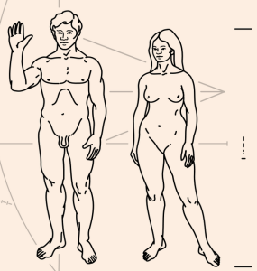 Depiction of humans on the Pioneer plaque