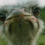 Genital Herpes – I Am Like an Ostrich – STD Interviews