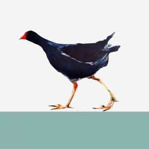The Steel Rooms Moorhen Card