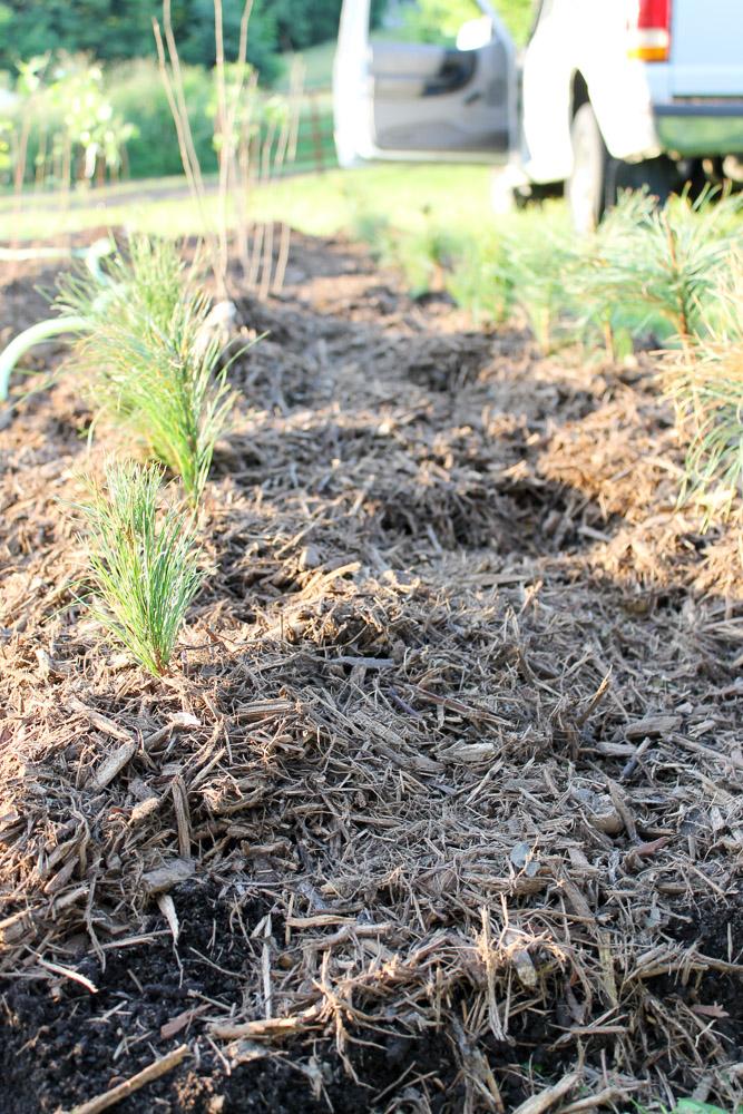 stewart_settlement_105_trees-14