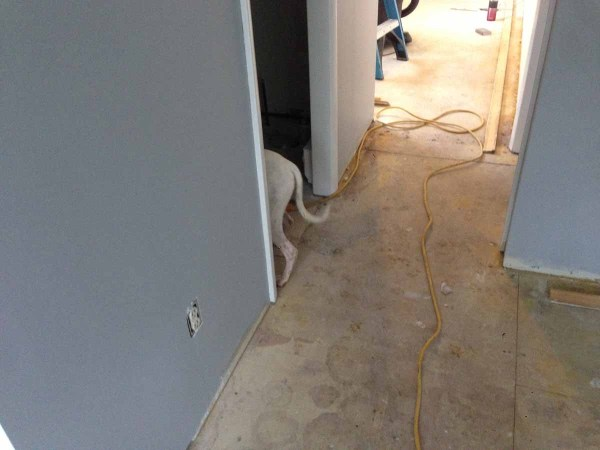 That's not my dog. Apartment renovation style